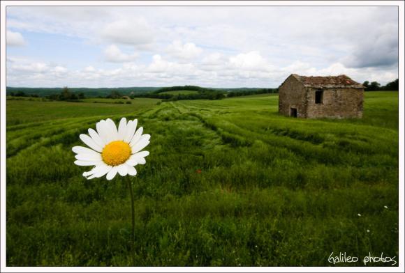 http://clair-obscur.cowblog.fr/images/marguerite.jpg